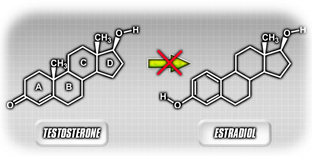 Testosterone->Estradiol Diagram