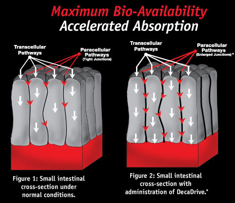 Maximum Bio-Availability, Accelerated Absorption